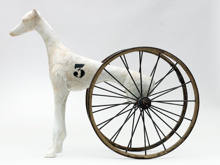 RaceDog