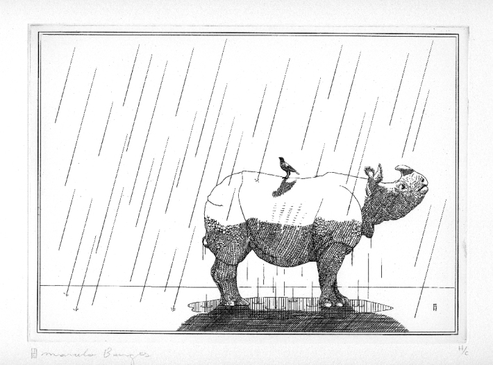 Rinoceronte_Final
